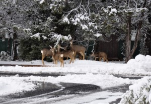 7. The deer came to the RV park to say goodbye